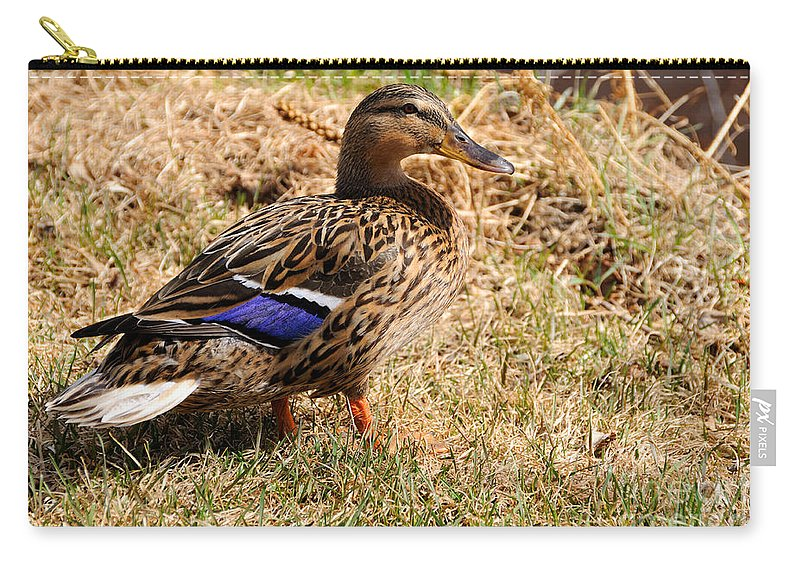 Water Carry-all Pouch featuring the photograph Female Mallard On A River Bank In Alaska by Gary Whitton