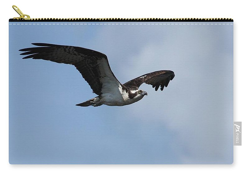 Osprey Carry-all Pouch featuring the photograph Flight Of The Osprey by Teresa McGill