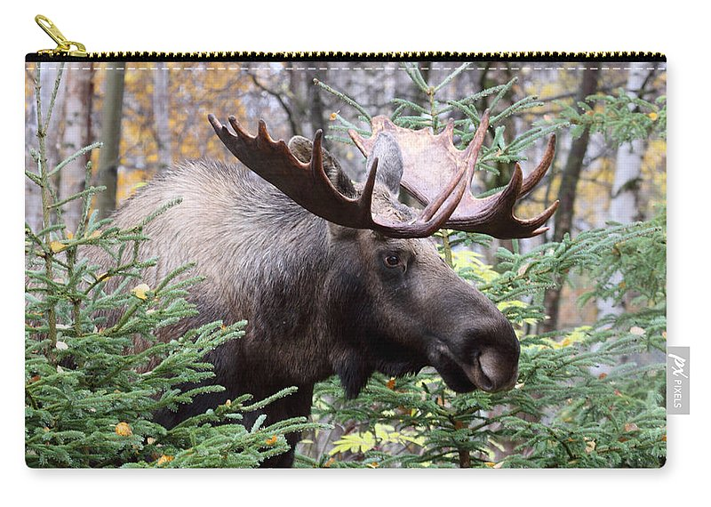 Doug Lloyd Carry-all Pouch featuring the photograph Forest Creeper by Doug Lloyd