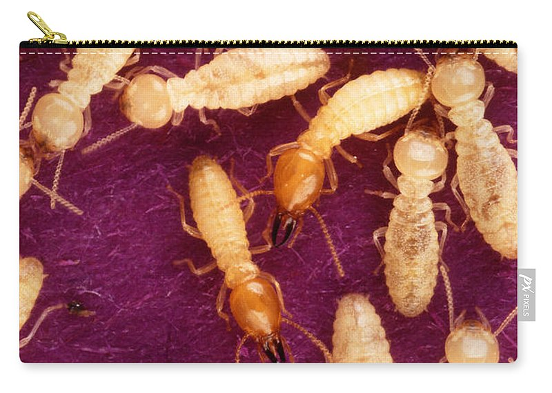 Formosan Termite Carry-all Pouch featuring the photograph Formosan Termites by Science Source