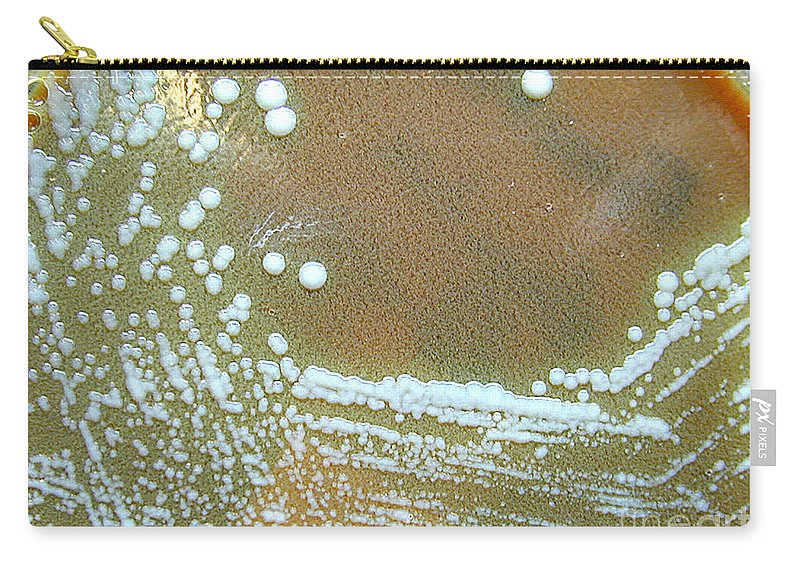 Bacteria Carry-all Pouch featuring the photograph Francisella Tularensis Culture by Science Source