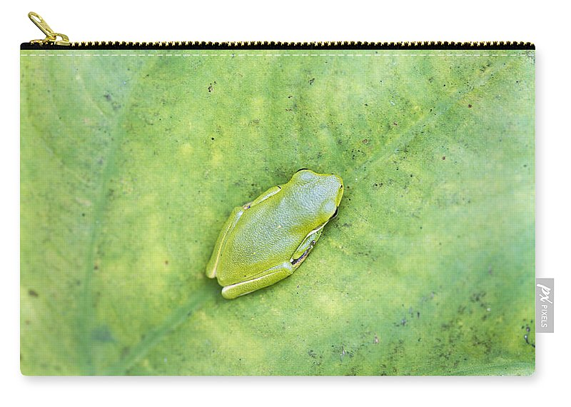 Hyla Cinerea Carry-all Pouch featuring the photograph Frog by Kathy Clark