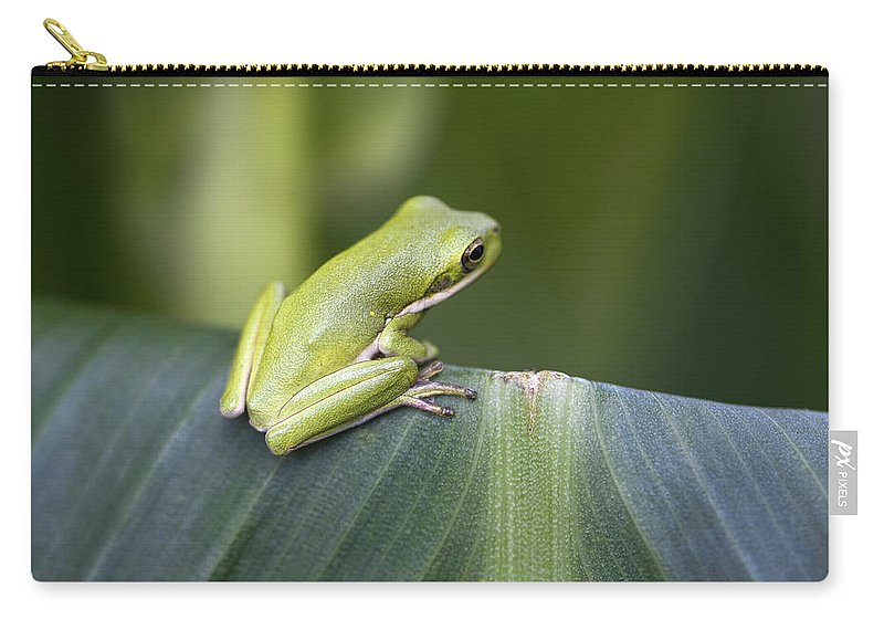 Hyla Cinerea Carry-all Pouch featuring the photograph Froggie On A Leaf by Kathy Clark