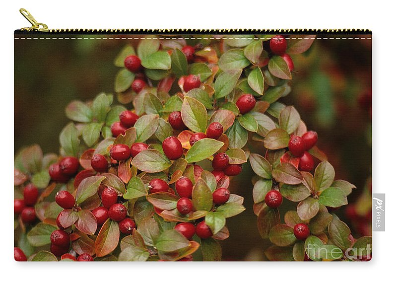 Berries Carry-all Pouch featuring the photograph Fruits Of The Season by Sharon Elliott
