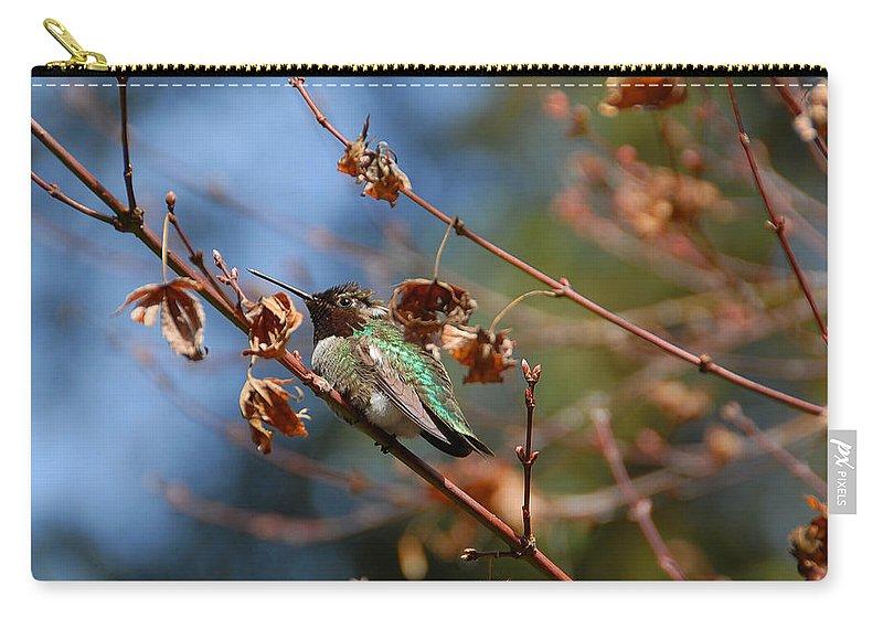 Hummer Carry-all Pouch featuring the photograph Garden Hummer by Lynn Bauer