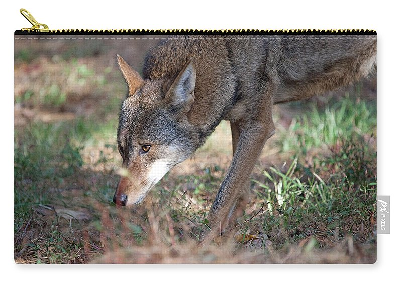 Wolf Carry-all Pouch featuring the photograph Gentle Wolf by Karol Livote