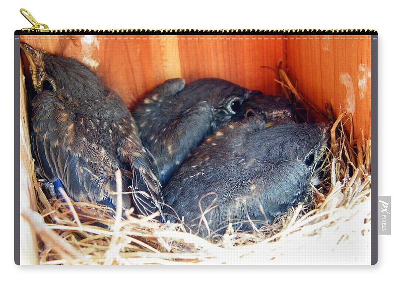Baby Bluebirds Carry-all Pouch featuring the photograph Getting Crowded by Judy Wanamaker