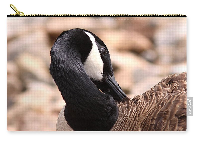 Canada Goose Carry-all Pouch featuring the photograph Getting Pretty by Travis Truelove
