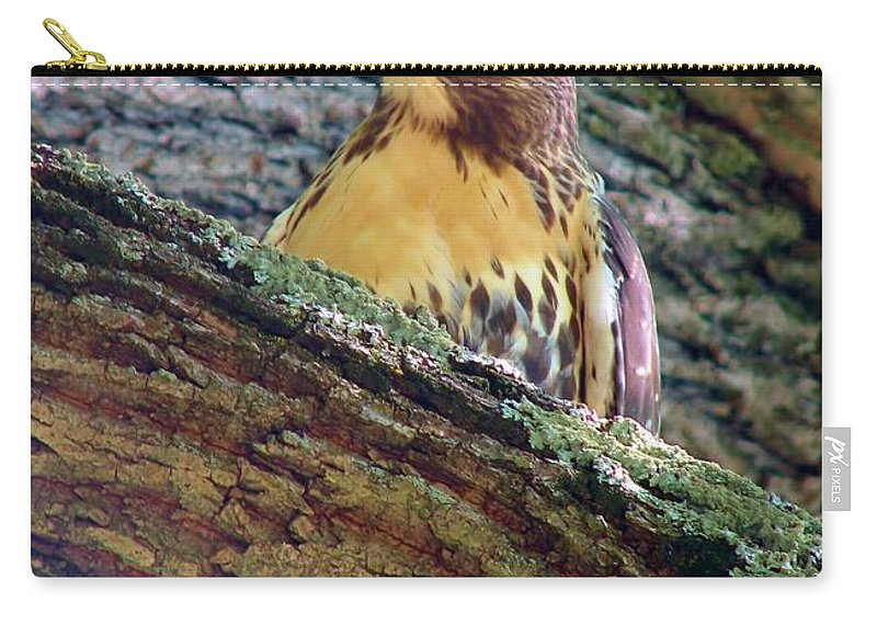 Hawk Carry-all Pouch featuring the photograph Glare by Art Dingo