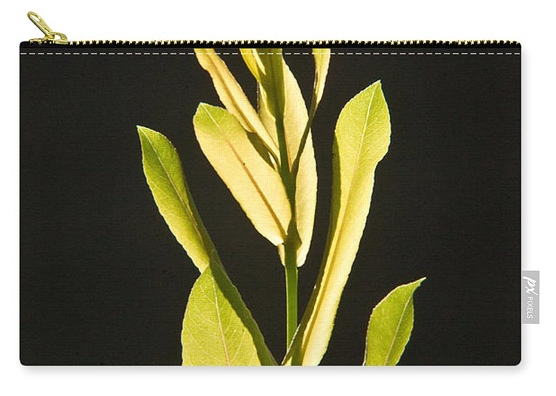 Glorious Carry-all Pouch featuring the photograph Glorious Willow Aglow by Douglas Barnett