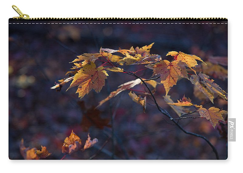 Glowing Carry-all Pouch featuring the photograph Glowing Maple Leaves by Douglas Barnett
