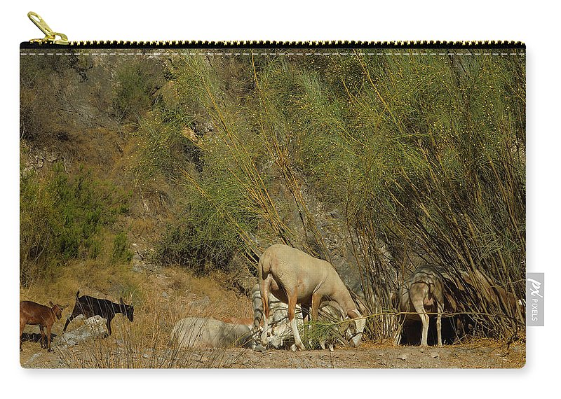 Colette Carry-all Pouch featuring the photograph Goat Meeting In Spain by Colette V Hera Guggenheim