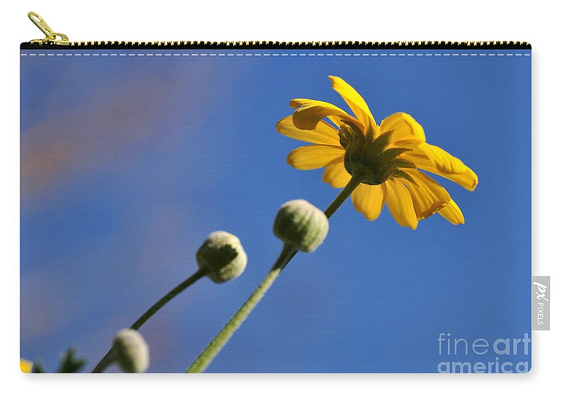 Photography Carry-all Pouch featuring the photograph Golden Daisy On Blue by Kaye Menner