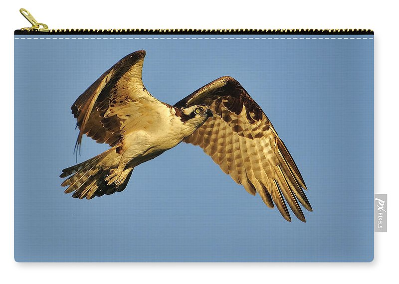 Golden Carry-all Pouch featuring the photograph Golden Osprey In Dawn's Early Light by Bill Dodsworth