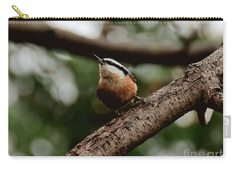Nuthatch Carry-all Pouch featuring the photograph Good View by Cheryl Baxter