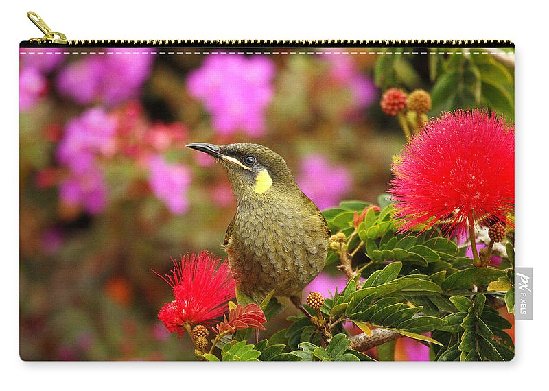 Graceful Honeyeater Carry-all Pouch featuring the photograph Graceful Honeyeater by Andrew McInnes