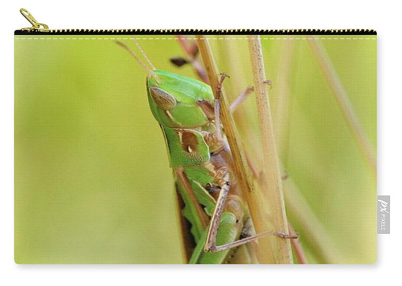 Close-up Carry-all Pouch featuring the photograph Grasshopper In Green by JD Grimes