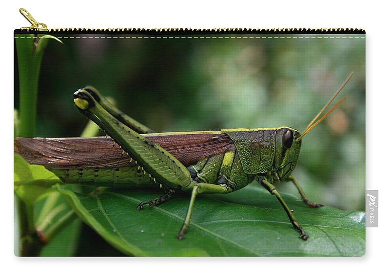 Nature Carry-all Pouch featuring the photograph Grasshopper by Marty Fancy