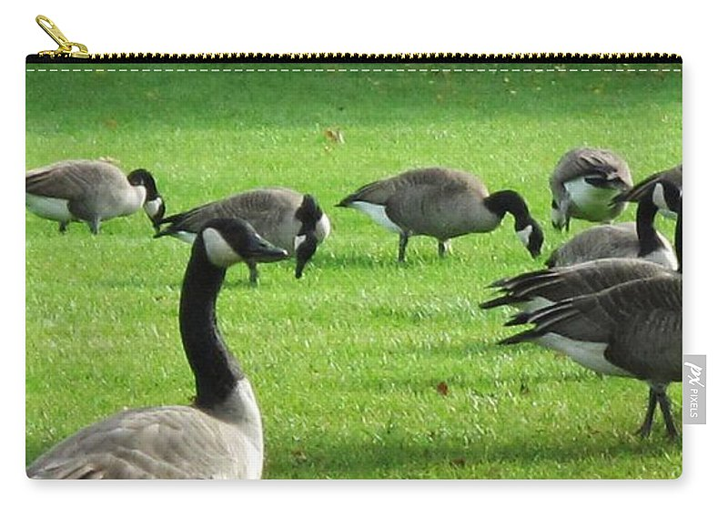 Canada Geese Carry-all Pouch featuring the photograph Grazing by Ian MacDonald