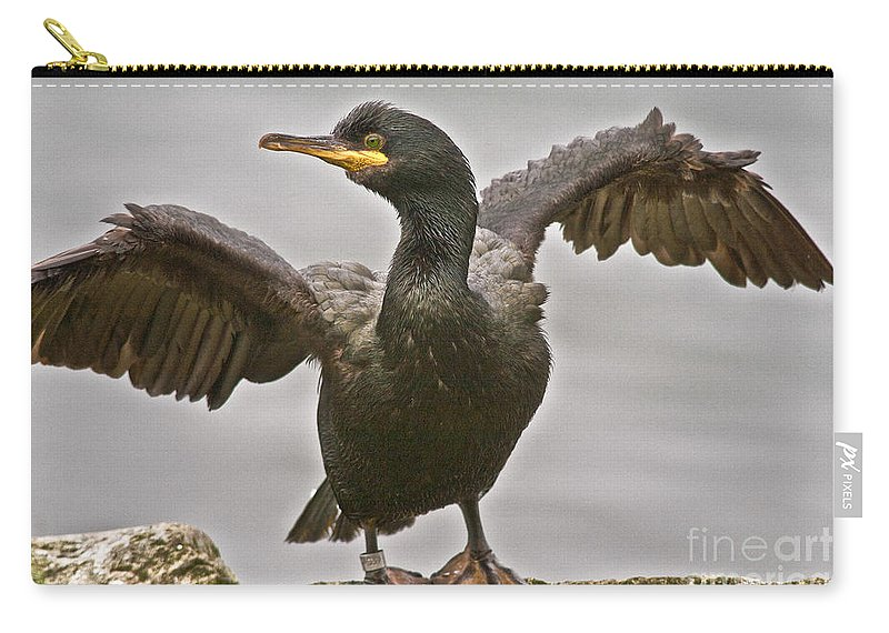 Nature Carry-all Pouch featuring the photograph Great Black Cormorant by Heiko Koehrer-Wagner