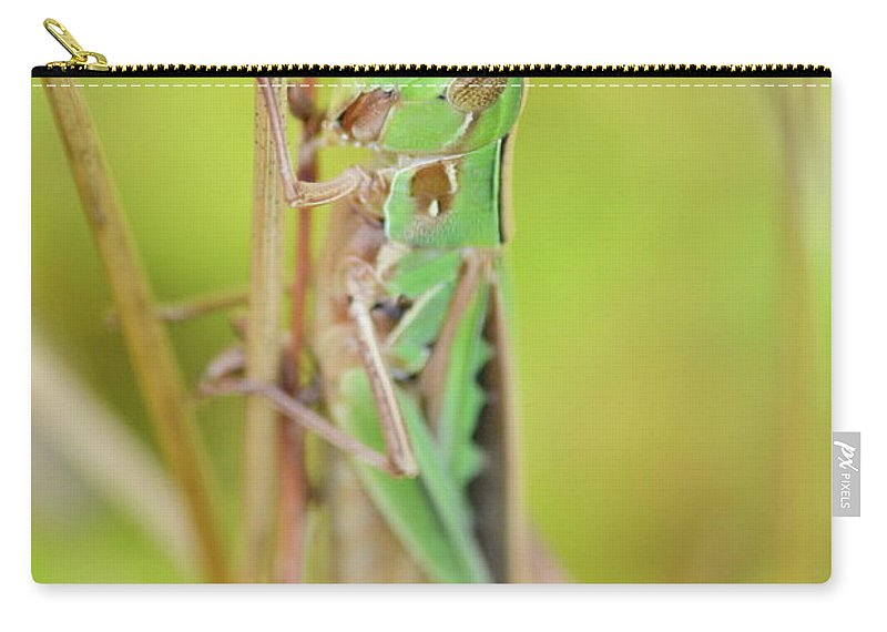 Admirable Grasshopper Carry-all Pouch featuring the photograph Green Grasshopper by JD Grimes