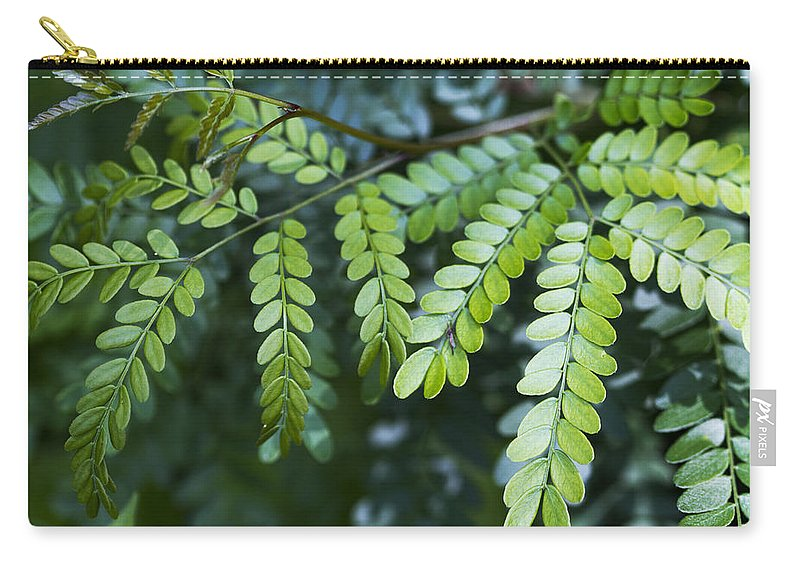 Green Carry-all Pouch featuring the photograph Green by Kathy Clark