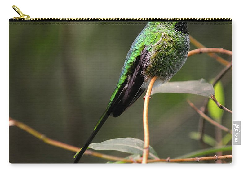 Green Carry-all Pouch featuring the photograph Green Tailed Trainbearer by Bill Dodsworth