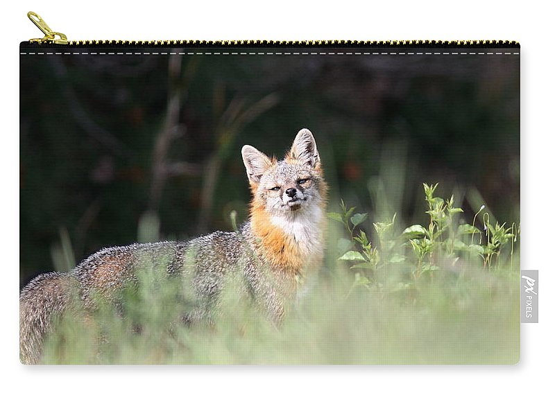 Grey Fox Carry-all Pouch featuring the photograph Grey Fox - The Man by Travis Truelove