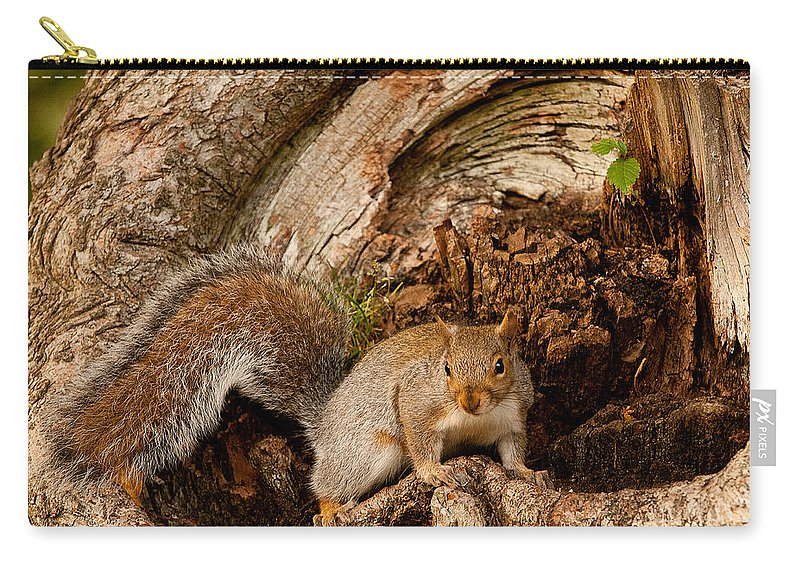 guarding The Palace Carry-all Pouch featuring the photograph Guarding The Palace by Paul Mangold