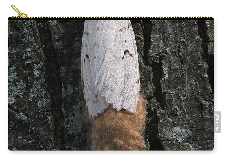Gypsy Moth Carry-all Pouch featuring the photograph Gypsy Moth With Egg Mass by Doris Potter