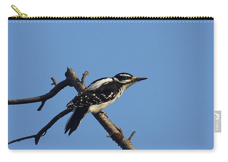Doug Lloyd Carry-all Pouch featuring the photograph Hairy Woodpecker by Doug Lloyd
