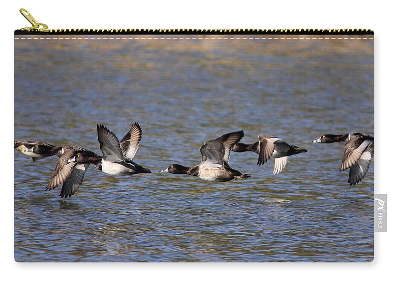 Ring Necks Carry-all Pouch featuring the photograph Half Dozen More by Travis Truelove