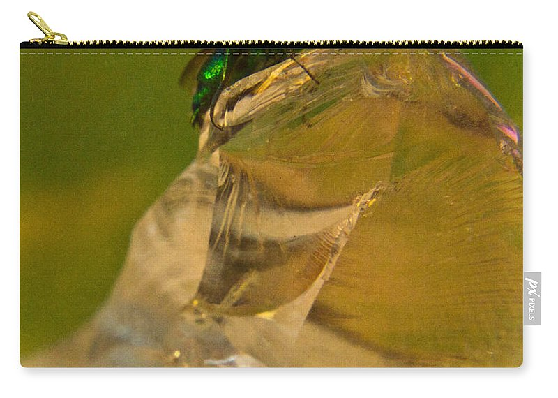 Wasp Carry-all Pouch featuring the photograph Halicid Bee 10 by Douglas Barnett