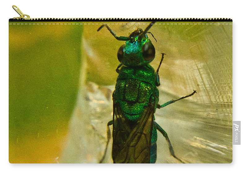 Wasp Carry-all Pouch featuring the photograph Halicid Bee 15 by Douglas Barnett
