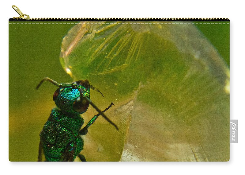 Wasp Carry-all Pouch featuring the photograph Halicid Bee 17 by Douglas Barnett