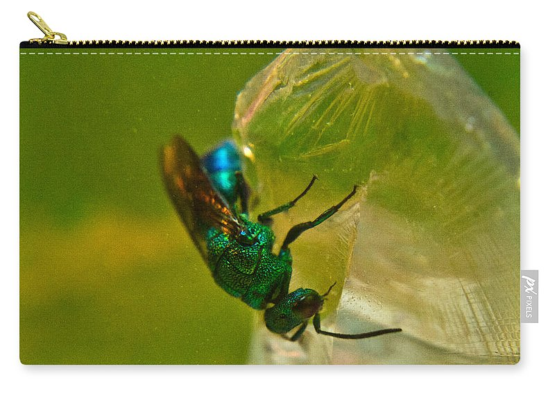 Wasp Carry-all Pouch featuring the photograph Halicid Bee 20 by Douglas Barnett