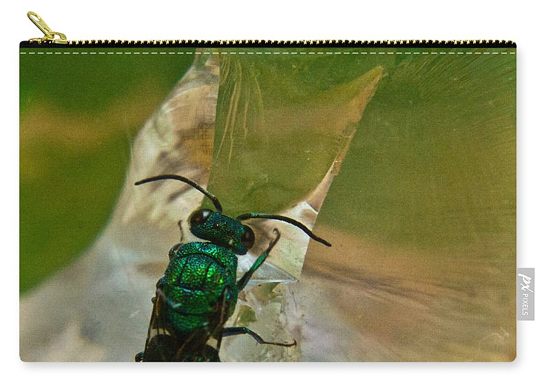 Wasp Carry-all Pouch featuring the photograph Halicid Bee11 by Douglas Barnett