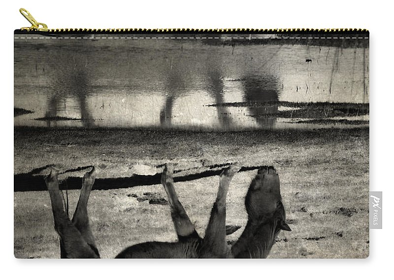 Horse Carry-all Pouch featuring the photograph Hand That Feeds by The Artist Project