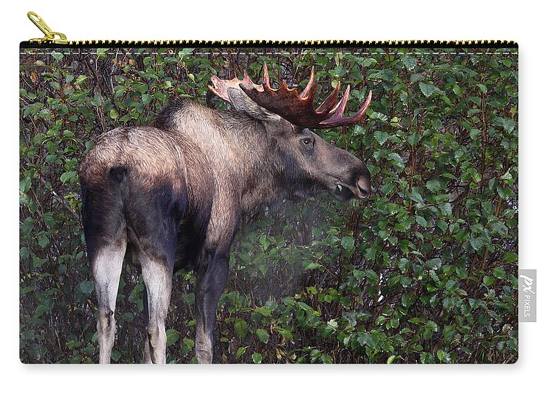 Doug Lloyd Carry-all Pouch featuring the photograph Handsome Fellow by Doug Lloyd