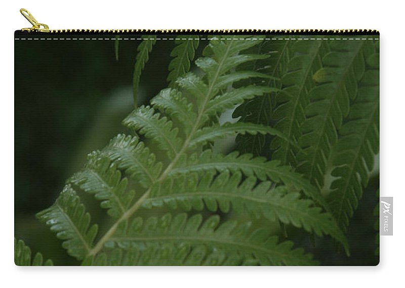 Aloha Carry-all Pouch featuring the photograph Hapuu Pulu Hawaiian Tree Fern - Cibotium Splendens by Sharon Mau