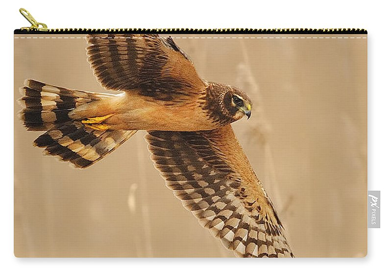 Harrier Carry-all Pouch featuring the photograph Harrier Over Golden Grass by William Jobes