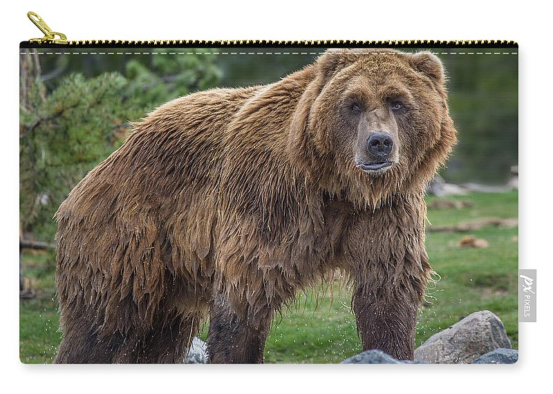 Grizzly Carry-all Pouch featuring the photograph Having A Bad Fur Day by Greg Nyquist