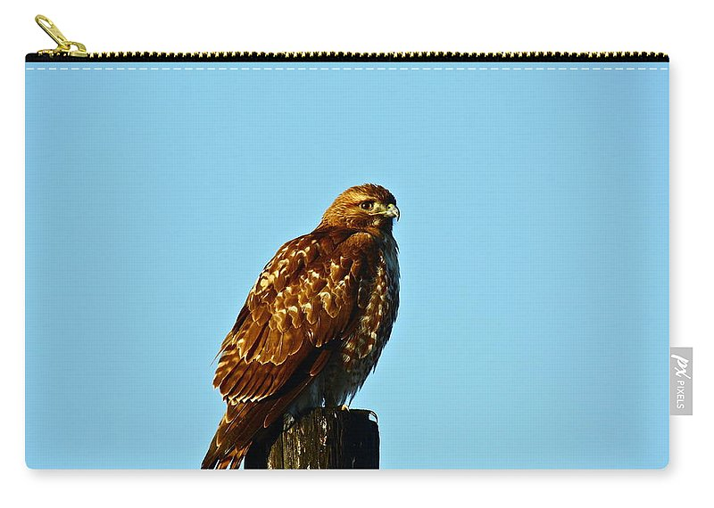 Birds Carry-all Pouch featuring the photograph Hawk Eye by Diana Hatcher