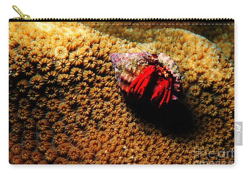 Hermit Crab Carry-all Pouch featuring the photograph Hermit Crab On Coral by Mike Nellums