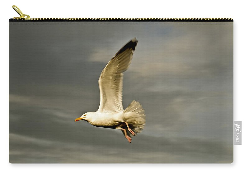 Herring Gull Carry-all Pouch featuring the photograph Herring Gull Larus Argentatus by Steve Purnell