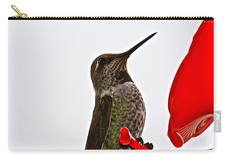 Birds Carry-all Pouch featuring the photograph Hold That Pose by Diana Hatcher