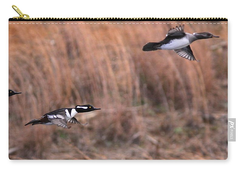 Hooded Merganser Carry-all Pouch featuring the photograph Hooded Merganser Gaining Altitude by Travis Truelove