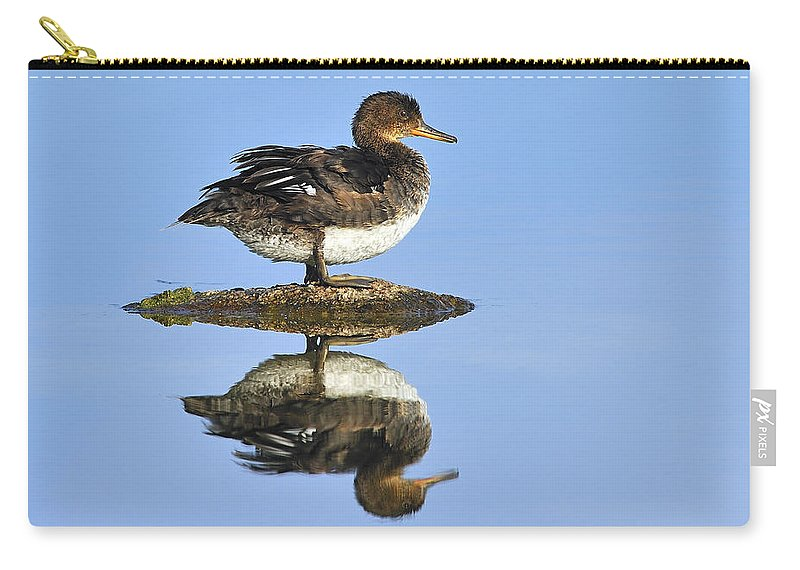 Reflection Carry-all Pouch featuring the photograph Hooded Merganser Reflection by Tony Beck