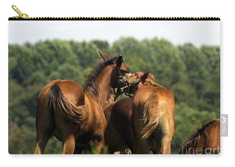 Horse Carry-all Pouch featuring the photograph Horse Foul Play IIi by Terri Winkler