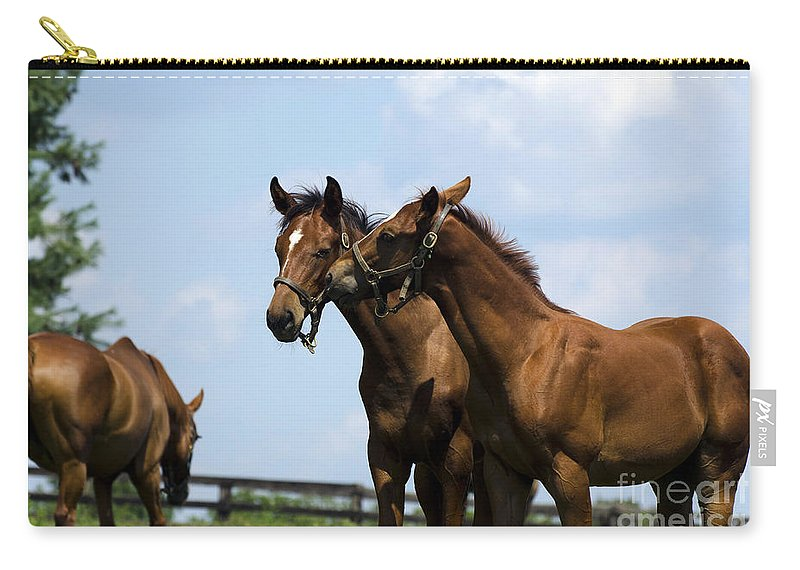 Horse Carry-all Pouch featuring the photograph Horse Foul Play Vi by Terri Winkler